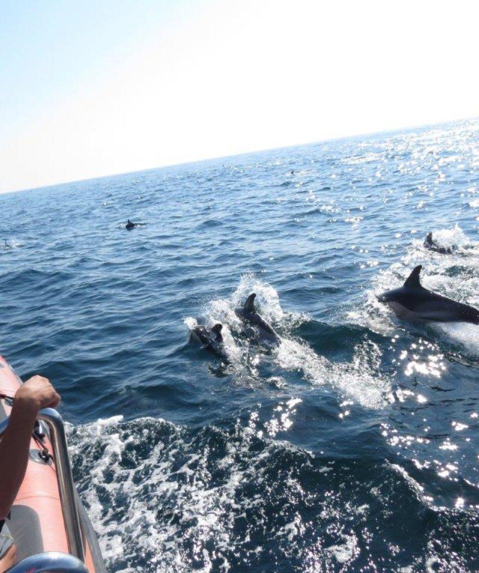 Safari aos golfinhos, Dolfin Safari